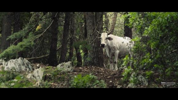 mucca-800
